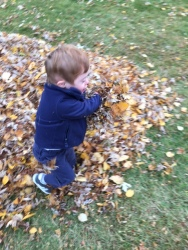 T w leaves5