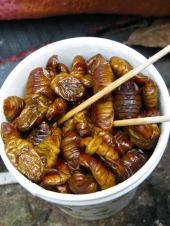 silkworm-larvae